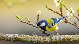 Bird Wildlife Blue Tit 4096x3050 Wallpaper