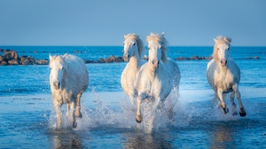Horse Ocean Splash 3840x2160 Wallpaper