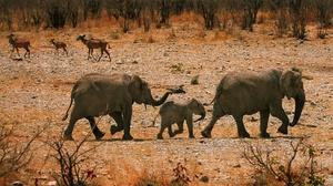 Baby Animal Elephant Wildlife 3840x2160 Wallpaper