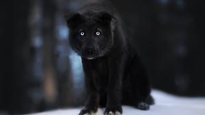 Dog Pet Baby Animal Puppy 2048x1365 Wallpaper