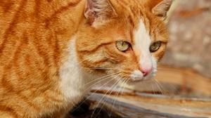 Cat Pet 4077x3258 Wallpaper