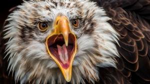 Bird Bird Of Prey Close Up 2048x1367 Wallpaper