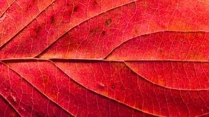 Leaf Macro Red 2048x1363 Wallpaper