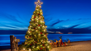 Christmas Tree Beach Ocean Horizon Sky 4000x2580 Wallpaper
