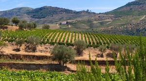 Landscape Italy Grapevine 5120x1440 Wallpaper