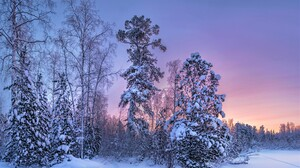 Earth Forest Sky Snow Sunset Winter 3300x2000 Wallpaper