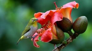 Bird Wildlife Flower 2048x1365 Wallpaper