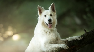 Dog Pet 2048x1363 Wallpaper