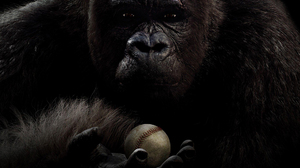 Gorilla 1920x1080 Wallpaper