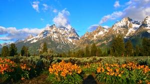 Earth Flower Landscape Mountain Spring 2749x1557 Wallpaper