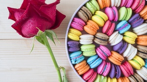 Colors Flower Macaron Rose Sweets 4592x3448 Wallpaper