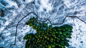 Aerial Forest Green Snow Winter 3000x1685 Wallpaper