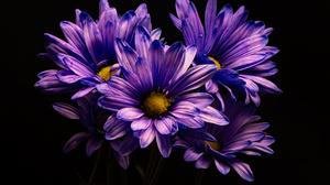 Purple Flower 5000x4000 wallpaper