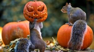 Funny Halloween Holiday Jack O 039 Lantern Squirrel 1920x1080 Wallpaper