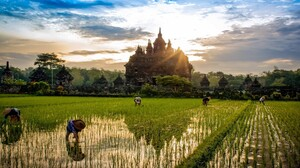 Nature Landscape Rice Paddy Temple Buddhism Field Workers Water Clouds Peasants Trees 1800x1125 Wallpaper