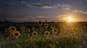 Outdoors Landscape Sun Sky Flowers Plants Sunflowers Nature 3840x2160 Wallpaper
