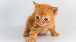 Baby Animal Cat Kitten Pet 2560x1707 wallpaper