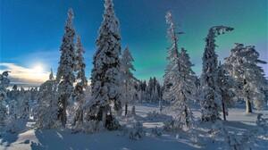 Earth Forest Pine Sky Snow Tree Winter 2048x1365 Wallpaper