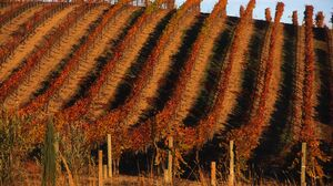 Landscape Vineyard 5184x3456 Wallpaper