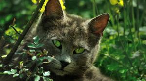 Animal Cat Grass Green Eyes Pet 2314x1537 Wallpaper