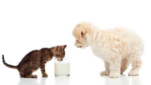 Baby Animal Cat Dog Kitten Milk Puppy 5616x3392 Wallpaper
