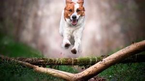 Animal Dog 2048x1366 Wallpaper