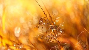 Sunlight Bokeh Macro 2400x1600 wallpaper
