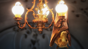 Animal Bat Chandelier Light Manipulation 2000x1335 Wallpaper