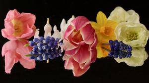 Colorful Hyacinth Reflection Tulip 3000x1820 Wallpaper