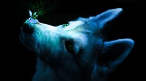 Dog Angel Blue Magic Green Animal Ears 4160x6240 Wallpaper