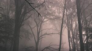 Forest Mist Winter Film Grain Trees Nature Dark 1536x1024 wallpaper