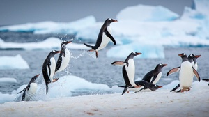 Penguin Wildlife 2048x1402 wallpaper