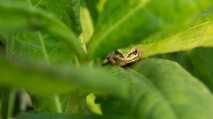 Amphibian Frog Green Leaf Wildlife 2048x1365 Wallpaper