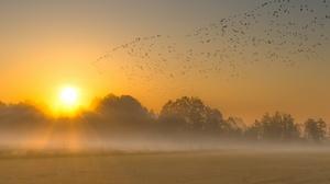 Nature Fog Flock Of Birds Sky Sun 2560x1600 Wallpaper