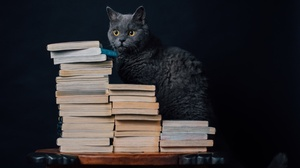 Book Cat Pet 2048x1281 Wallpaper