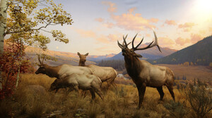 Animal Elk 2000x1164 Wallpaper