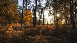 Fall Forest Nature 3840x2160 wallpaper
