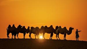 Caravan Silhouette Sun Sunset 2048x1082 Wallpaper