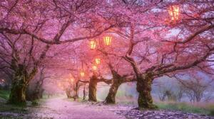 Cherry Blossom Spring 1920x1080 Wallpaper