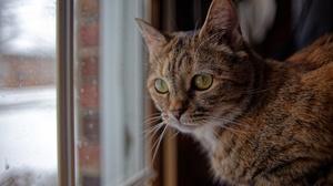 Cats Ears Whiskers Fur Window Animals Mammals Feline By The Window Tabby 6144x4096 Wallpaper