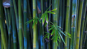 Earth Bamboo 1920x1080 Wallpaper