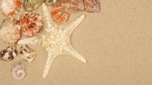 Sand Shell Starfish 3872x2592 Wallpaper