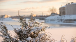 Winter Cold Outdoors Plants 4000x2667 Wallpaper