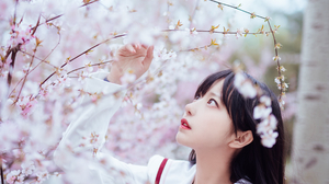 Cherry Blossom Asian 2688x4032 wallpaper