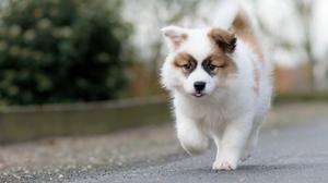 Baby Animal Dog Pet Puppy 2047x1367 Wallpaper