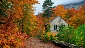 Colorful Fall House Shed Tree 3600x2403 wallpaper