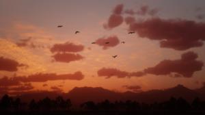 Red Dead Redemption 2 Red Dead Redemption Ii Video Games Video Game Landscape Sunset Forest 2560x1440 Wallpaper