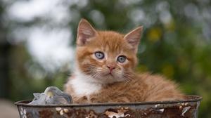 Baby Animal Cat Kitten Pet 2000x1335 Wallpaper
