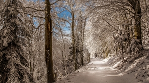 Snow Road Forest 2000x1333 Wallpaper