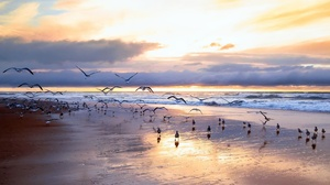Beach Bird Cloud Horizon Seagull Sky 2048x1365 Wallpaper